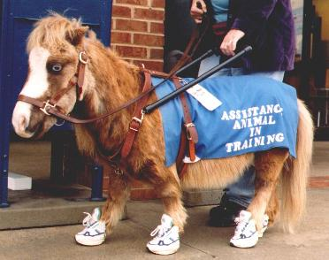 horses wearing shoes | Famous After I Die Art & Digital Blog