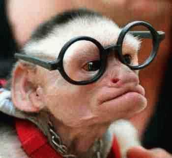 monkey | Famous After I Die Art & Digital Blog